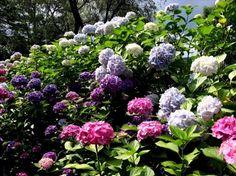 Virágos kert - virágok, szirmok, kert, virágzik
