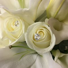 Diamond pins in roses