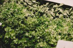 Ikea Home, Herbs, House, Home, Herb, Homes, Houses, Medicinal Plants