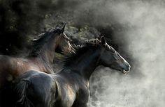 Beautiful horse photography {Part 4}