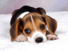 Awwww!  National Puppy Day is March 23rd.