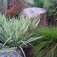 http://www.mooseyscountrygarden.com/dog-garden-path/variegated-iris-japonica-2.jpg