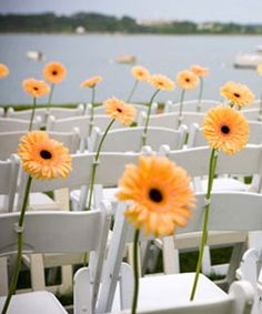 Daisies brighten up any seating space! | SocialTables.com | event-planning software