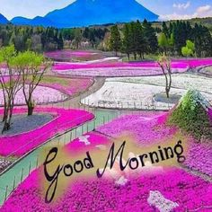 In today's post, we are going to present romantic good morning quotes and messages. If you are looking for romantic good morning quotes and messages, then you have come to the right place. Good Morning Romantic, Good Morning Happy Sunday, Happy Sunday Quotes, Good Morning Gif, Good Morning Picture, Good Morning Flowers, Good Night Image, Good Morning Greetings, Morning Quotes
