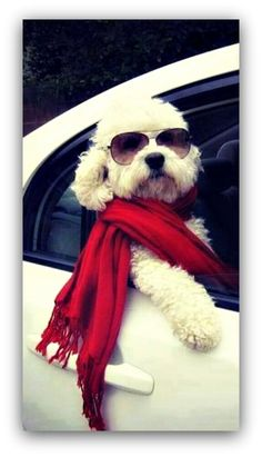 """I'm...too sexy for my scarf...the others go, """"Arf~Arf..."""" because I'm just toooo sexy!"""