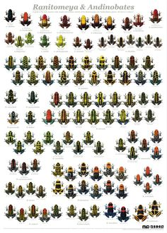 Variation in Thumbnail dart frogs, Ranitomeya + Andinobates