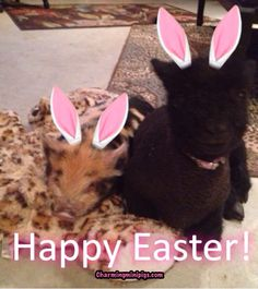 Have a great Easter!