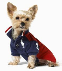 Polo Team Jersey from Ralph Lauren #pets #dogs #fashion