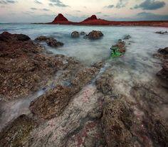 furcsa-novenyek-szigete-16