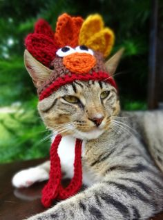 Turkey Cat Hat, Turkey Cat Costume - The Thanksgiving Turkey Hat for Cats and Small Dogs - Turkey Costume for Cat, Turkey Hat for Cat Costume Chat, Cat Costumes, Halloween Costumes, Crazy Cat Lady, Crazy Cats, I Love Cats, Cute Cats, Chat Crochet, Funny Animals