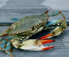 Crab Painting, Watercolor Paintings, Crab Tattoo, Crab Art, Louisiana Art, Crab And Lobster, Pastel Artwork, Ocean Creatures, Coastal Art