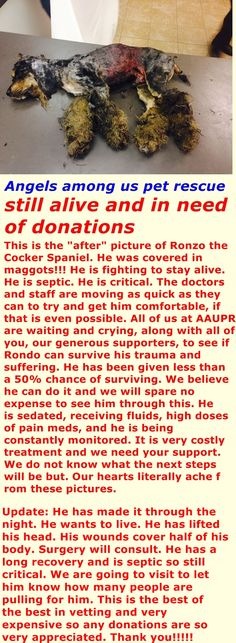 Please share and repin and if you can please donate. Donations link: https://www.facebook.com/angelsrescue/app_208195102528120?ref=page_internal Ronzo´s link https://www.facebook.com/angelsrescue?fref=photo