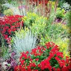 Bee-utiful garden #pollin8rchat Tuesdays 8pm CT www.thegardenbuzz.com