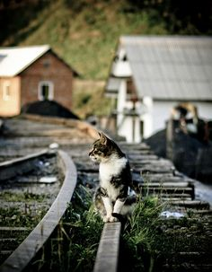 #Cats: Sitting on the railroad  Like,Repin,Share, Thanks!