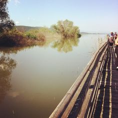 Camargue? No Lago Trasimeno #lake #altrasimeno  foto di @VerdeCardamomo