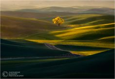 Road to Enlightenment. Z schnepf. tree, hills, green, light