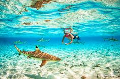 Swim with the sharks in Bora Bora and the other top things to do in Bora Bora.