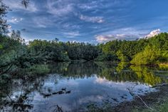 Carolina Bay Nature Preserve, Aiken SC