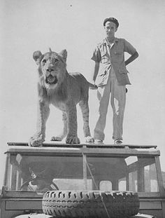 A dog, a lion, Norman Carr and a Land Rover, Zambia