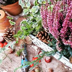 Podzim v truhlíku :-) Vřes a břečťan.