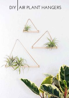 Make some airy planters for your air plants.