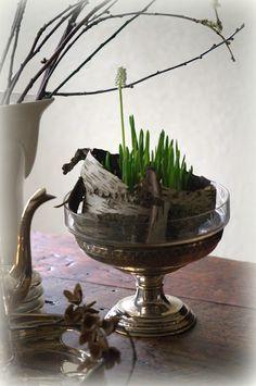 Leuke decoratie tip voor druifjes. Voorjaar - lente - spring, muscari, birch