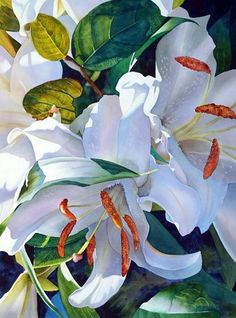 Susan Harrison-Tustain  —  Lilies  (593x800)