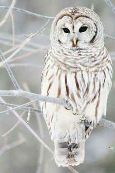 What a beautiful owl!