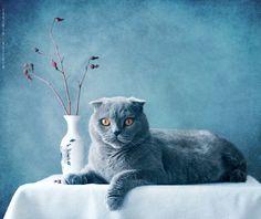 Silver beauty...