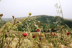 Golan hoogte