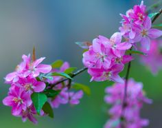SPRING IS PINK 2 by Vladimir Ternovoy on 500px