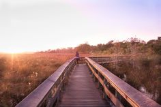 Are you dreaming of visiting the Everglades? We've done all the hard work and compiled our top 5 must have experiences in the Everglades National Park!