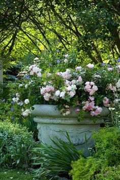 Flower Carpet Appleblossom rose in pot    Flower Carpet roses in a container garden. More info at www.tesselaar.com, www.youreasygarden.com, Twitter (@Tesselaar and @Lisa Howe) and Facebook (Tesselaar International Plants).