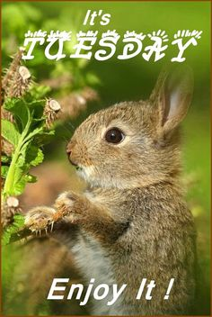 and now it's Tuesday!...:) Animals And Pets, Baby Animals, Cute Animals, Baby Bunnies, Cute Bunny, Bunny Rabbits, Bunny Bunny, Bunny Face, Adorable Bunnies