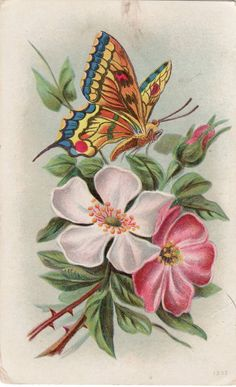 Butterfly with Dogwood Flowers 1909