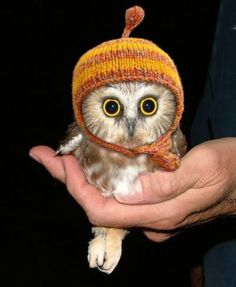 Tiny owl in a tiny hat, oh my goodness!