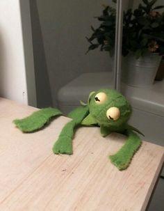 Bout to kermit suicide Meme Pictures, Reaction Pictures, Cute Memes, Funny Memes, Funny Pics, Funny Stuff, Sapo Frog, Sapo Kermit, Gavin Memes