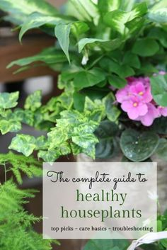 The most common reason houseplants die is over-watering. Yes, that's right. Not neglect and under watering. OVER watering. This is because the signs of overwatering looks the same as under watering so drowning plants get watered more and die :(  More on indoor plant care and troubleshooting, as well as the top choices for healthy plants #spon #ebay