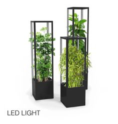CUBE planted - lamp for growing indoors, offices or gastro - lasfera Indoor Garden, Indoor Plants, Wooden Planter Boxes, Divider Design, Office Plants, Diy Mirror, Grow Lights, Plant Holders, Succulents Garden