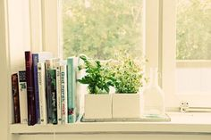 5 BEST HERBS TO GROW FOR WINDOWSILL HERB GARDEN. There are even recipes included for each herb