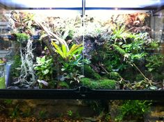 Large custom Paludarium built in our Oceanside store!