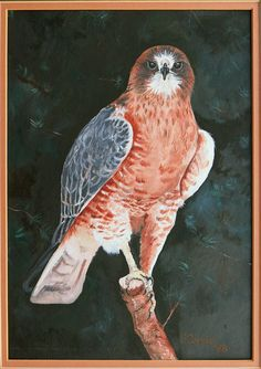 """""""Hawk"""" - 11""""x14"""" Oil on Canvas, Framed & matted - Available for sale"""