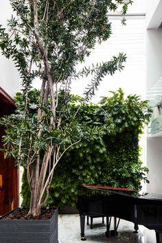 Muro verde interior en donde el protagonismo de las texturas de la vegetación y el piano hacen de la entrada una experiencia diferente. Piano, Interior, Landscape Design, Scenery, Blank Canvas, Entryway, Plants, Projects, Indoor