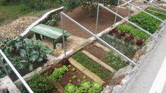 Veteményes ágyás ásás nélkül! - Megyeri Szabolcs kertész blogja Flora Garden, Herb Garden, Garden Design, Plants, Wings, Vegetable Gardening, Urban, Herbs Garden, Landscape Designs