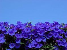 minden virág ...