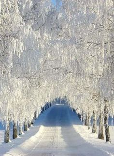 beautiful landscapes and flowers Winter Photography, Landscape Photography, Nature Photography, Coffee Photography, Winter Magic, Winter Snow, Winter Road, Winter Scenery, Snowy Day