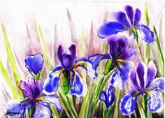 How to draw irises. The lesson in Russian, but is many pictures.