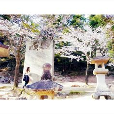 #sakura #love #daugther #travel #japan #holiday #family #pupuru #japantravel #wifirental
