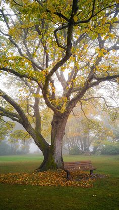 Autumn Bench in Fog - A foggy autumn morning at a park by the ocean on Vancouver Island.