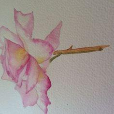 Rose Nina